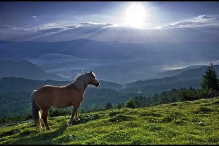 Non giudicate leggetela amore senza fine - Avere un cavallo ...